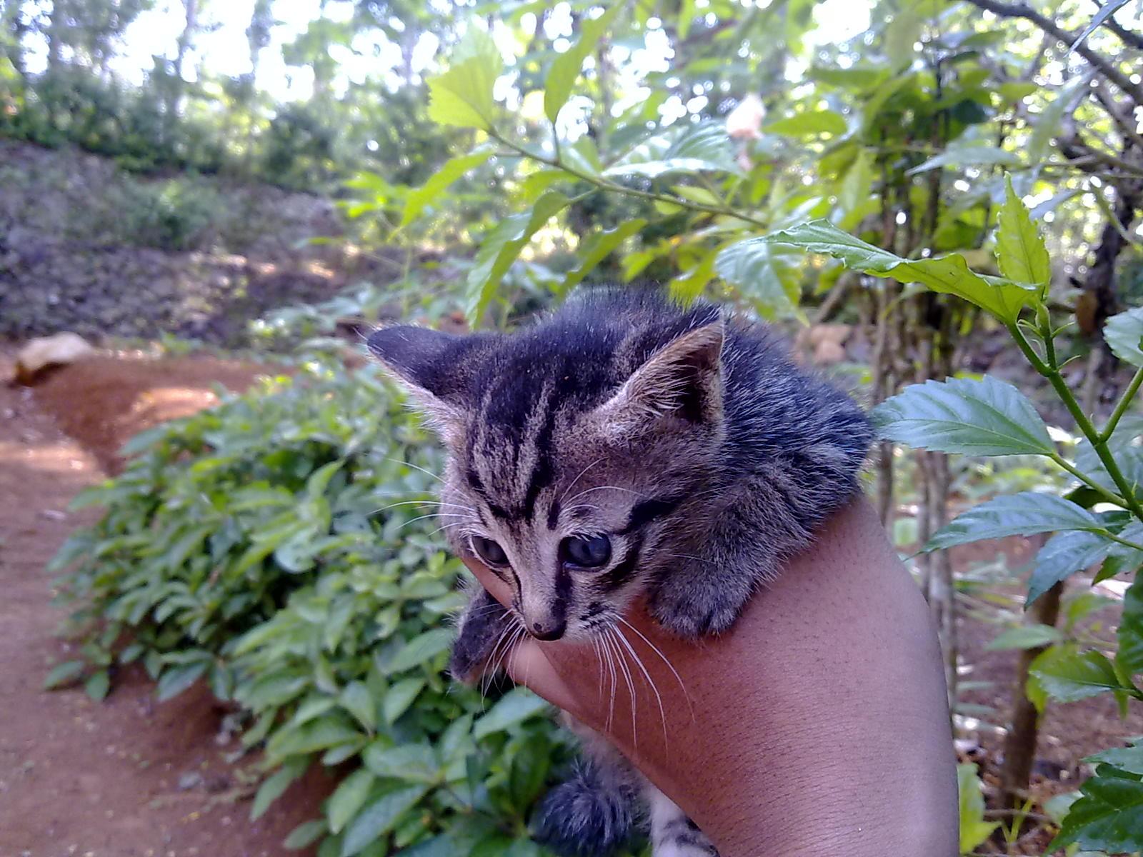 Foto Gambar Kucing Sedang Menyusu Lucu Sekali AhsanfileCom