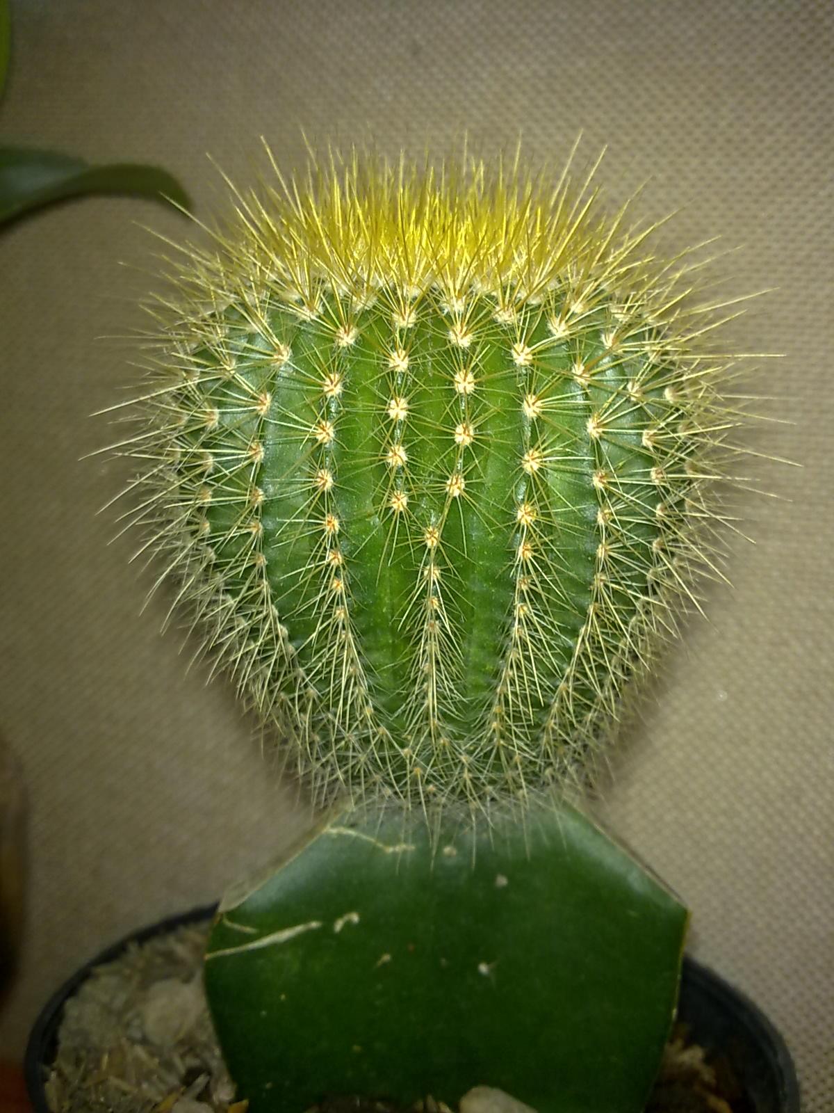 tanaman-hias-di-meja-kerja-ahsanfile-kaktus.jpg