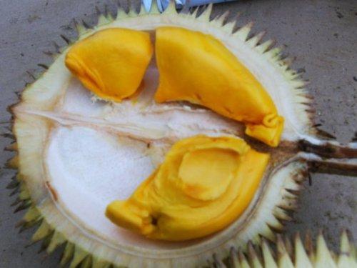 durian-creamy-tanpa-rasa-pahit-b
