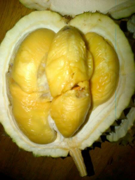 durian-creamy-tanpa-rasa-pahit
