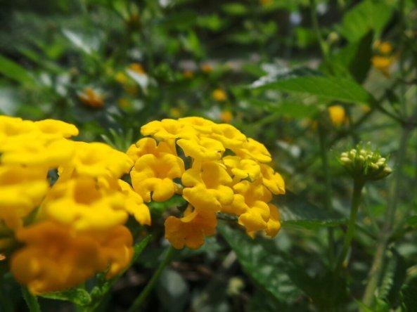Ini namanya tumbuhan apa ya ? soalnya bunganya bagus dan warna-warni