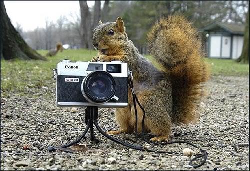 Sotret Shooter – Kumpulan artikel dan dan hasil fotografiahsanfile