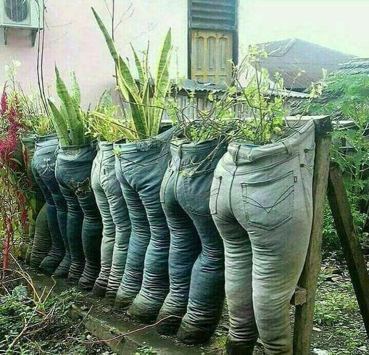 Ide bagus bertanam hias, pakai celana jeans bekas sebagiapot